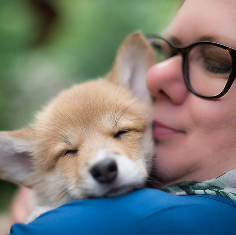 """A new owner cuddles her Pembroke Welsh Corgi puppy on the day she was picked up and brought home captured by Aurélie """"Photobya4"""" Four"""