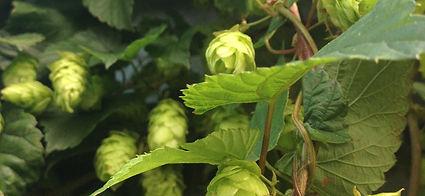 Poperinge hoppe bier beer trappist