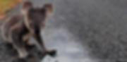 Bildschirmfoto 2020-01-08 um 18.04.39.pn