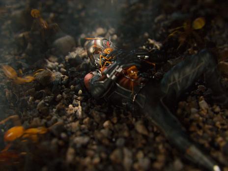 Ant-Man VFX write up
