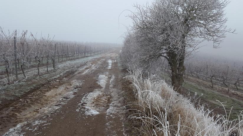 Rhh im Winter.jpg