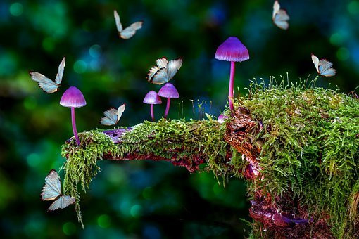 Magical Forest, CCO
