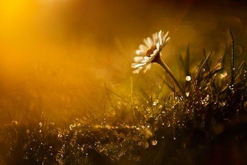Daisy, Sunrise, CCO