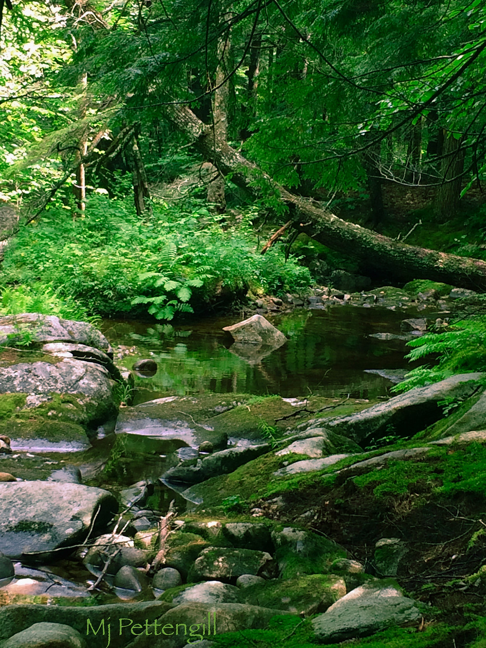 Woods, Forest, River, Trees, Solitude