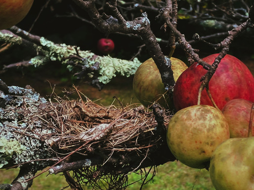 Marya of the Wood: Wildly Imperfect Apples