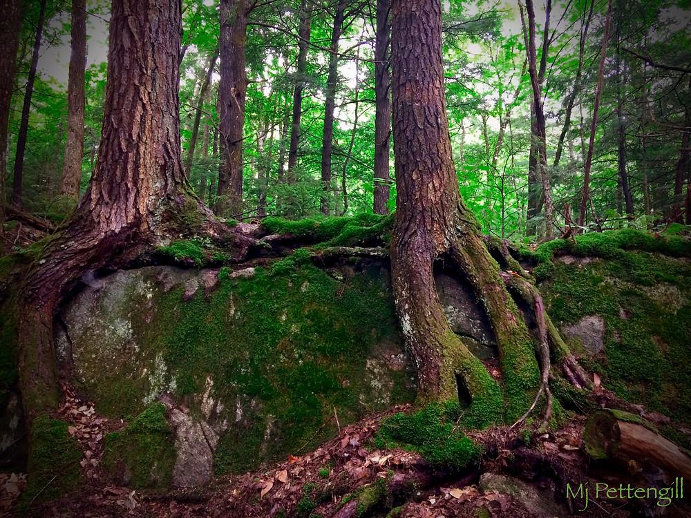 Woods, Roots, Moss