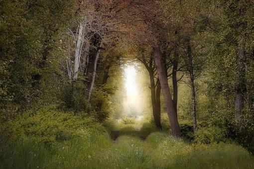 Magical Tree, CC0