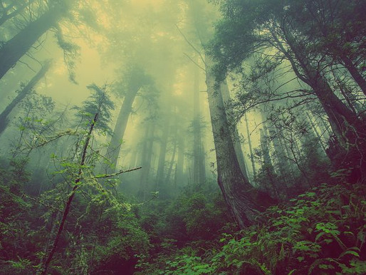 In the Pathless Woods