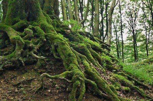 Unbroken Forest