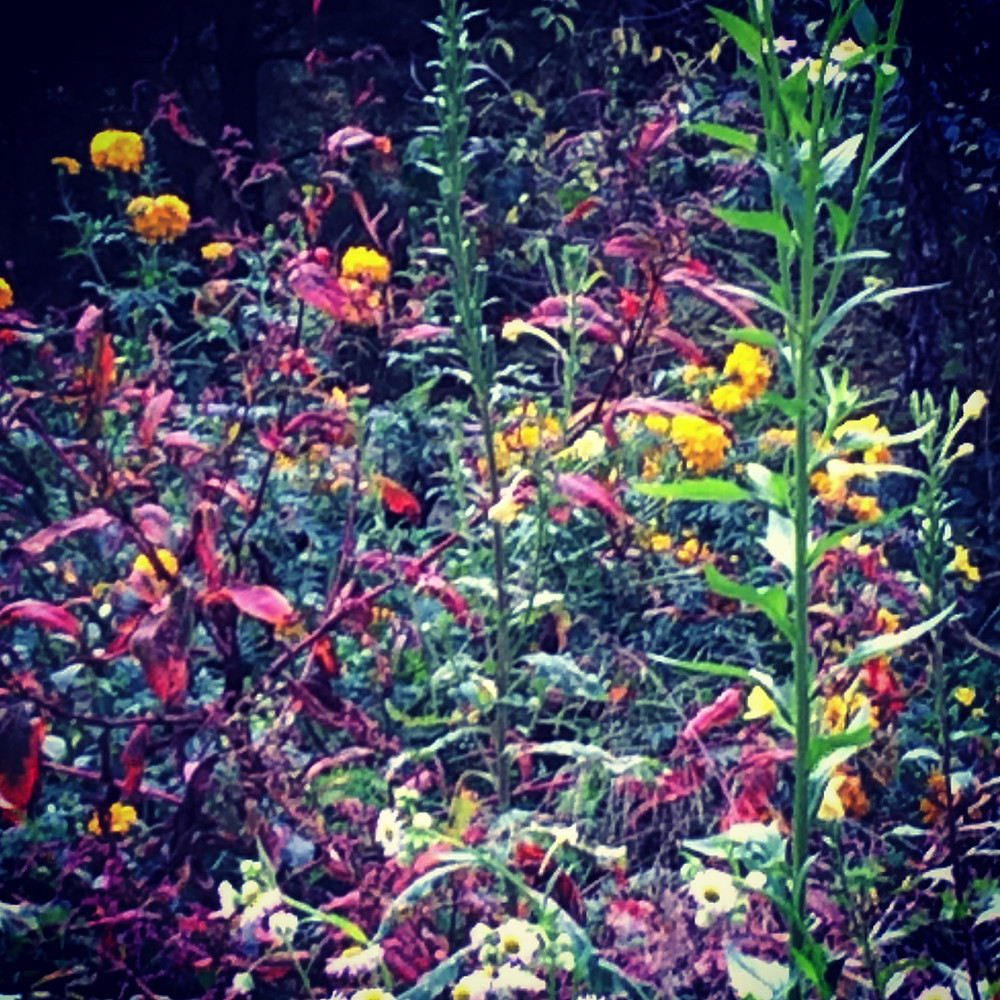 wildflowers, pollinators