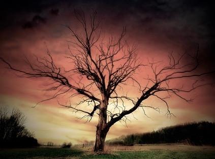Abigail's Tree, CCO