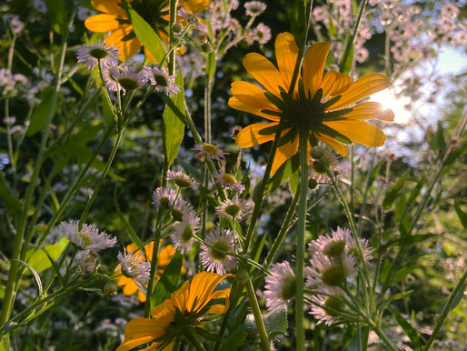 Marya of the Wood: Where the Sun Shines Through