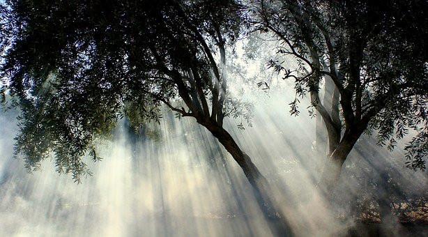 Tree, Sunlight, CCO