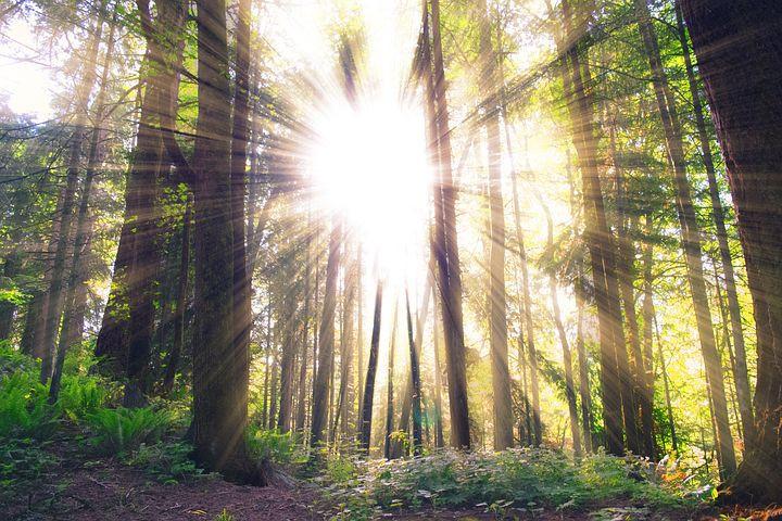 Trees, Forest, Sunshine, Woods