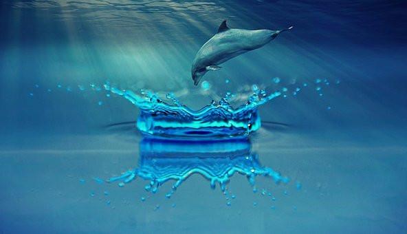 Dolphin, Ocean