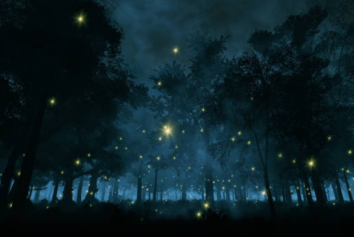 The Fireflies May Well Have Been Fairies