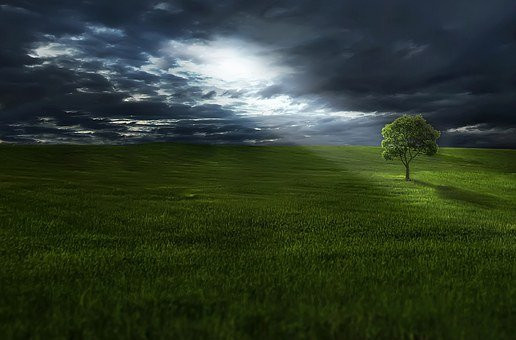 The Light and the Tree, CC0