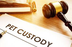 Pet Custody Lawyer
