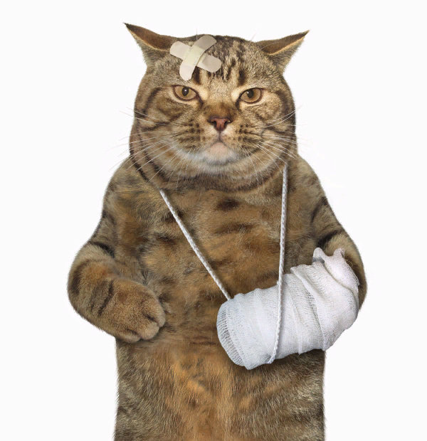 Veterinary Malpractice Lawyer Boston