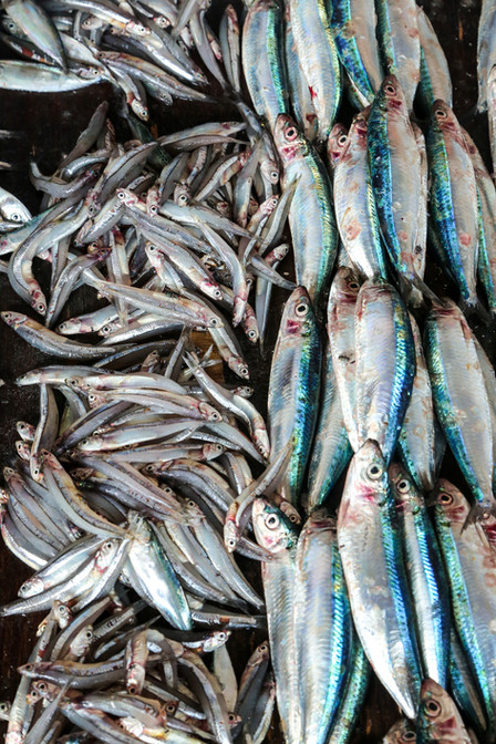 Fish Market, Stone Town, Zanzibar