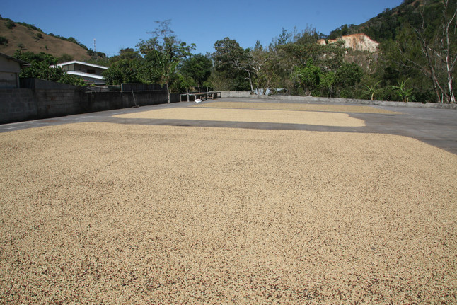 Coffee Plantation, Costa Rica