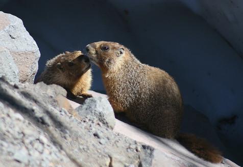 Marmot, USA