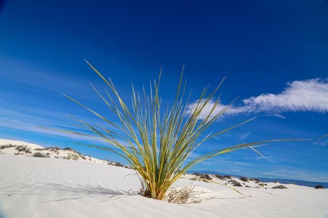 White Sands National Park, New Mexico, USA