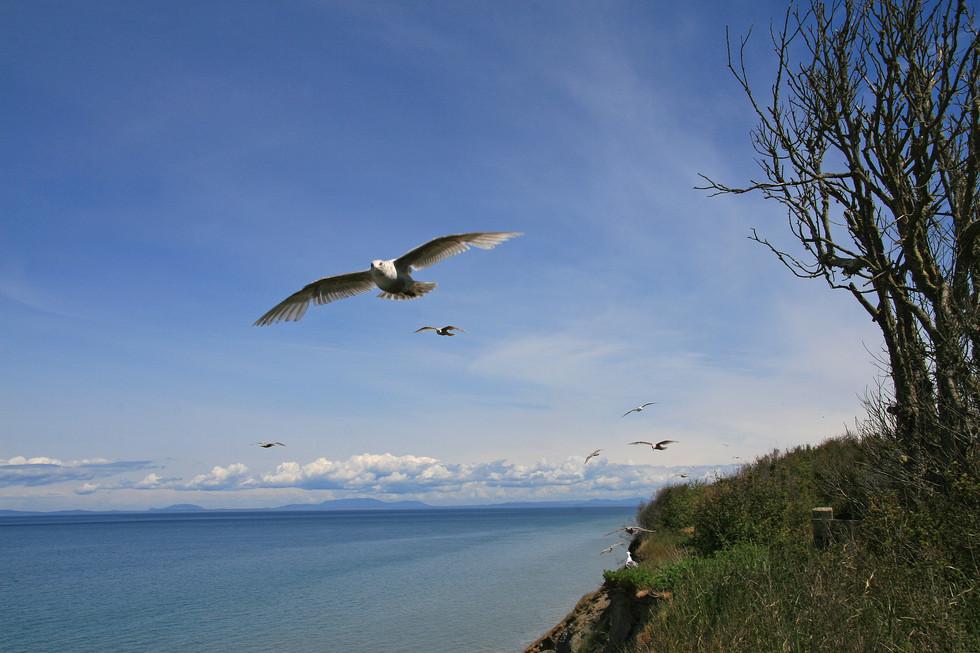 Seagulls, Oregon, USA
