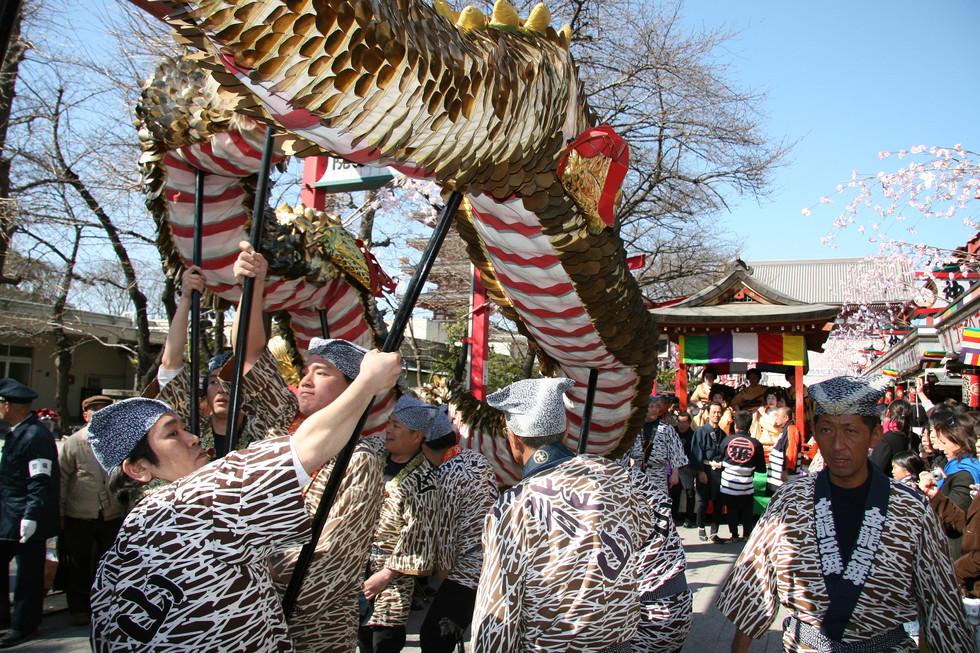 Golden Dragon Dance, Sensoji Temple, Tokyo, Japan