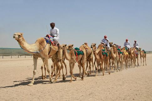 Camel Racetrack, Qatar