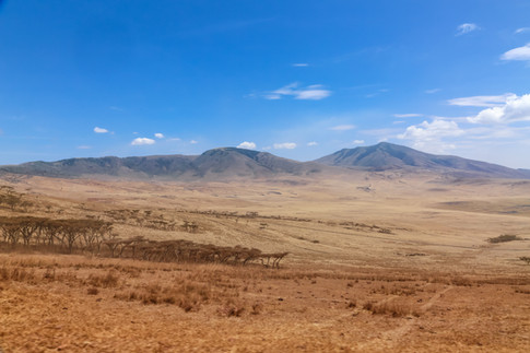 Serengeti Plains, Tanzania