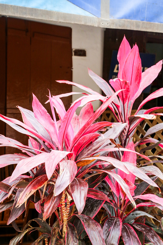 Flowers, Stone Town, Zanzibar