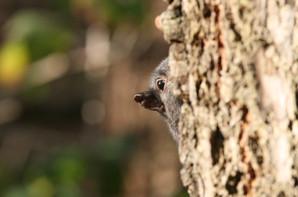 Squirrel, BC, Canada