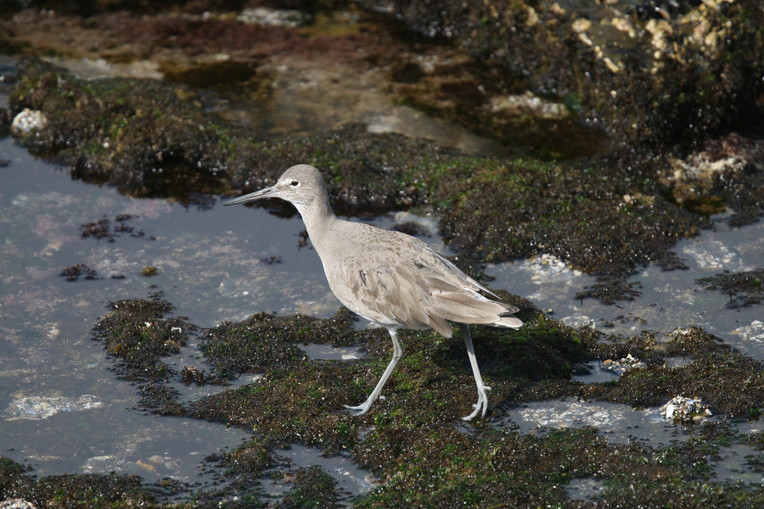 Willet, BC, Canada
