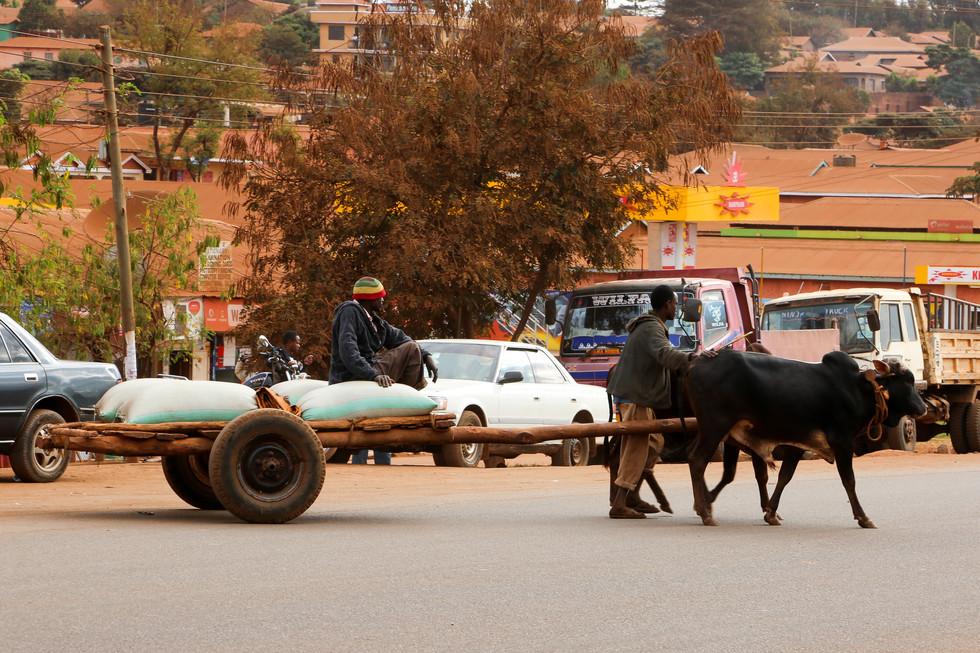 Local Transport, Serengeti, Tanzania