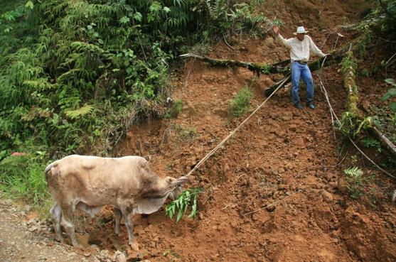 Farmer & Ox, Costa Rica