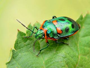 Habitats, Bugs, Reptiles