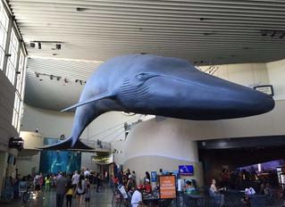 Celebration at Aquarium of the Pacific