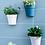Thumbnail: Chậu cây nhựa treo tường
