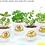 Thumbnail: Chậu cây cảnh kèm hạt mầm