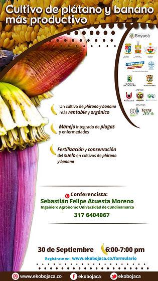 Invitación webinar Cultivo de plátano y banano más productivo