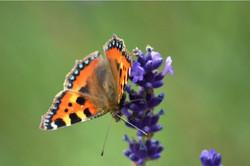 Butterfly..