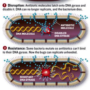 Bacteria detail.jpg