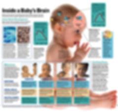 Baby's brain.jpg