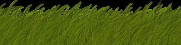vegetation_grass_card_03.png