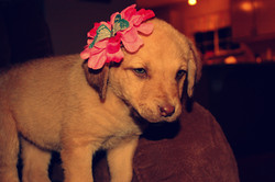 Cutest flower model EVER!