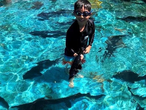 チョウザメと泳ぐ