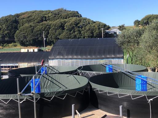 新しいプール建設中