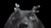 Hund tittar på Svenska Färskfoder