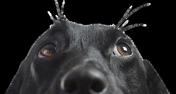 Banksy Dog Pet Supplies - Dog Food Club